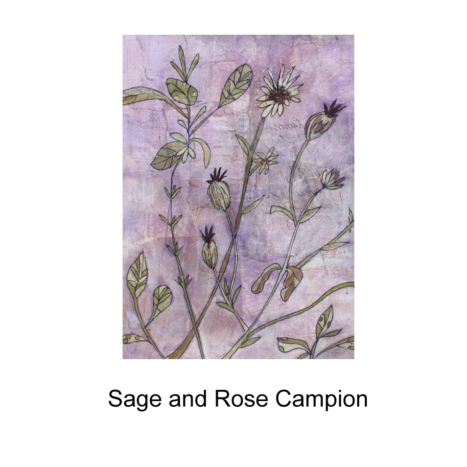 Sage and Rose Campion.jpg