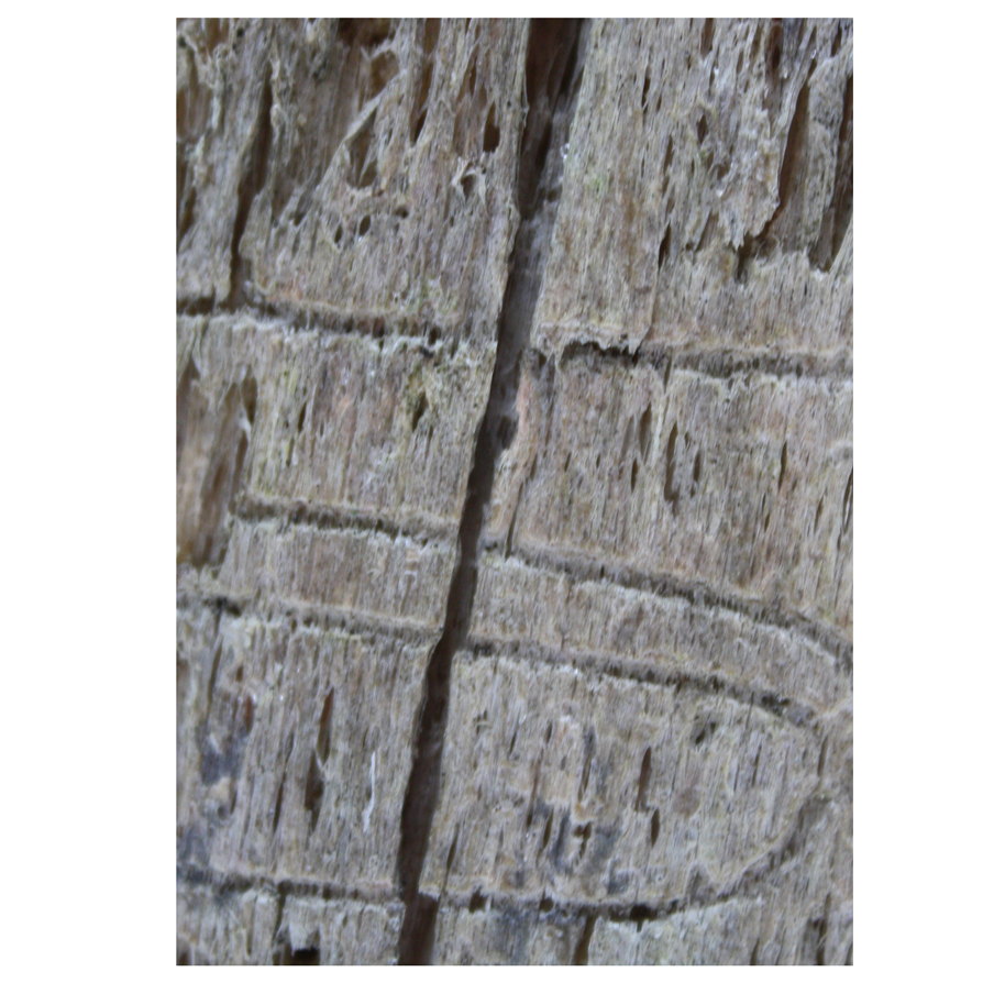 Bark from a tree marked by wood worm.