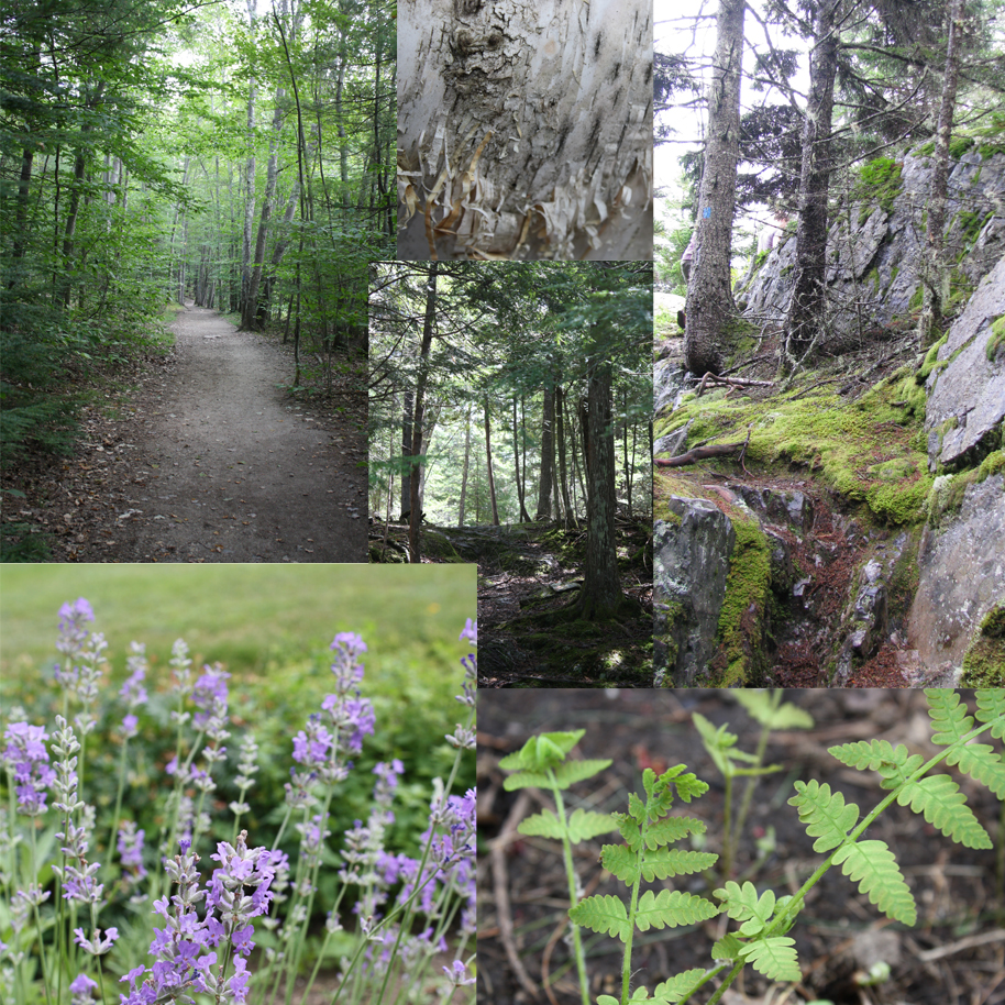 """Mood Board"" for Forest Path collage."