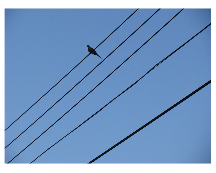 Mourning dove on wire against a blue sky.