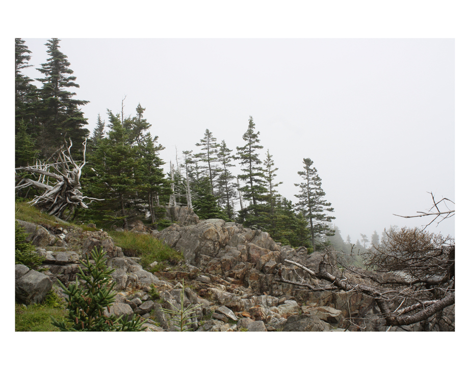 Rocks and trees near the ocean on a foggy day