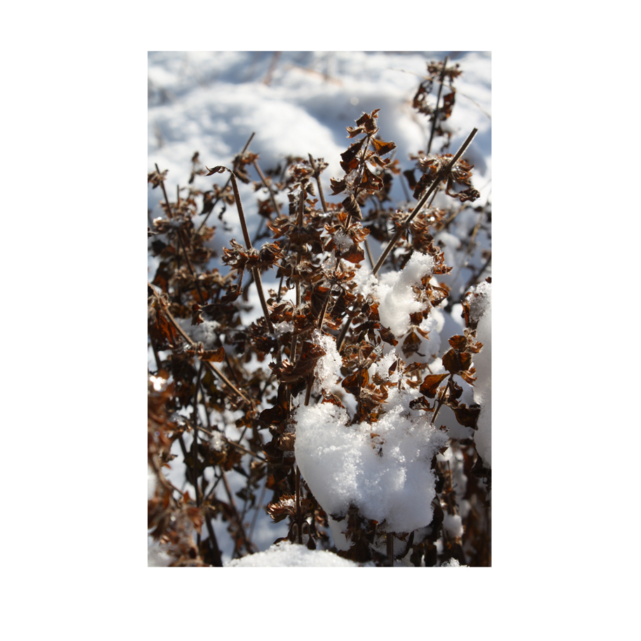 Herbs and Snow