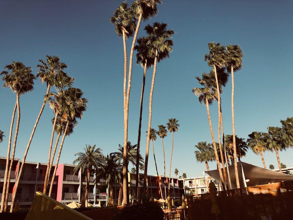 saguaro_ps.jpg