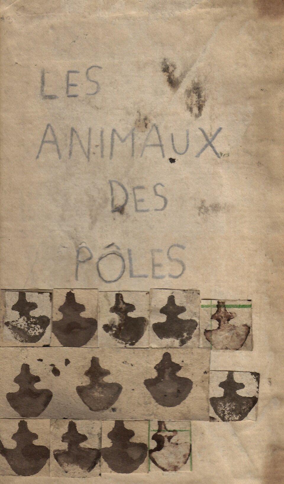les animaux des poles