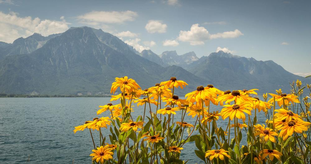 Florile din Elvetia si muntii din Franta.