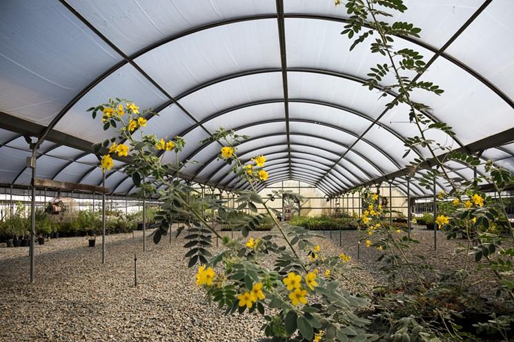 Southern California's Secret Garden : Tree of Life Nursery