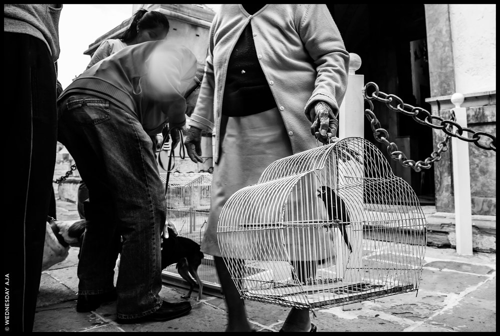 Blessing of the Animals // Guanajuato, Mexico