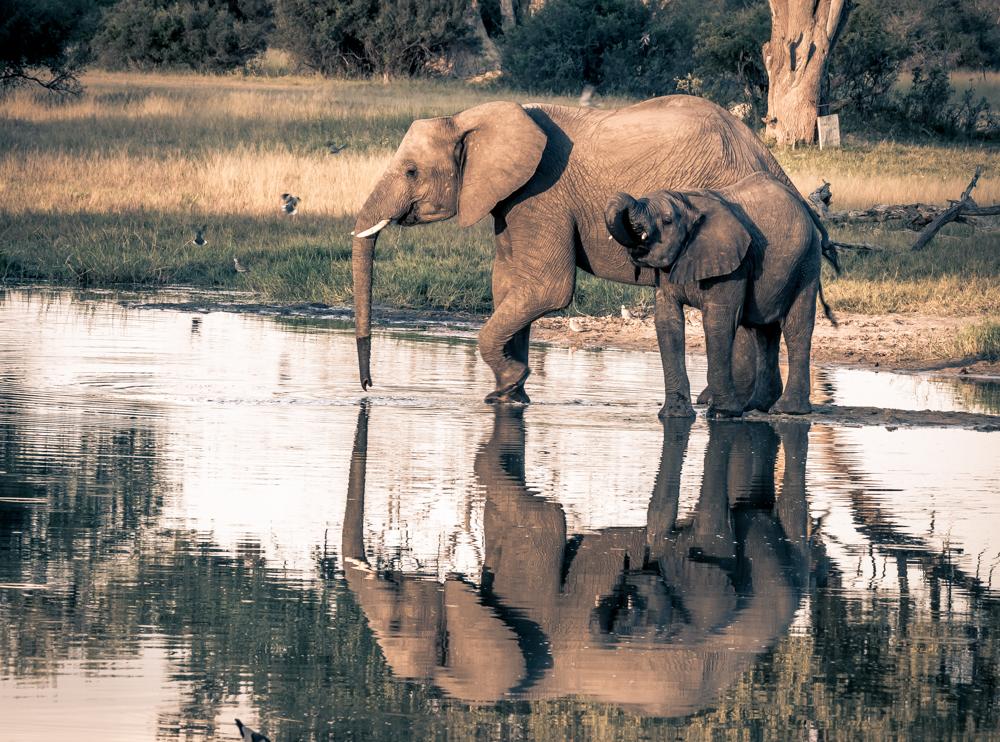 Msissons-Zimbabwe2018 (54 of 95).jpg