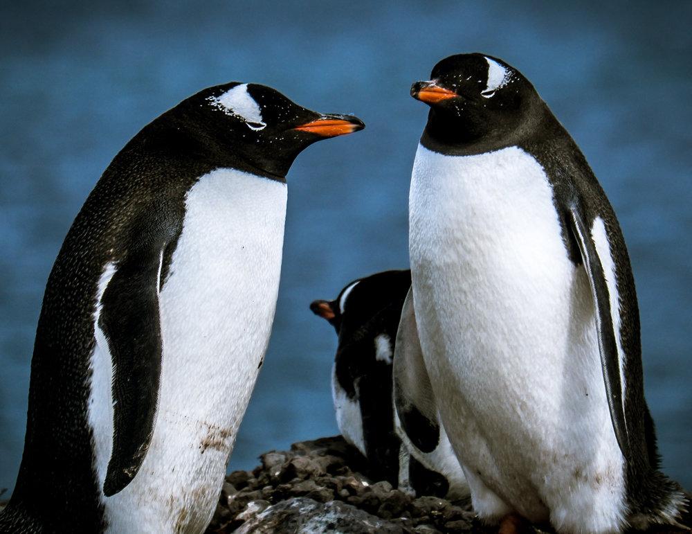MSissons-Antarctica-3.jpg