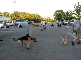 puppy circl