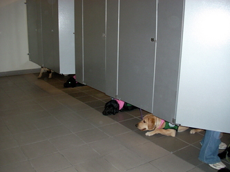 puppies in the bathroom in the BJC
