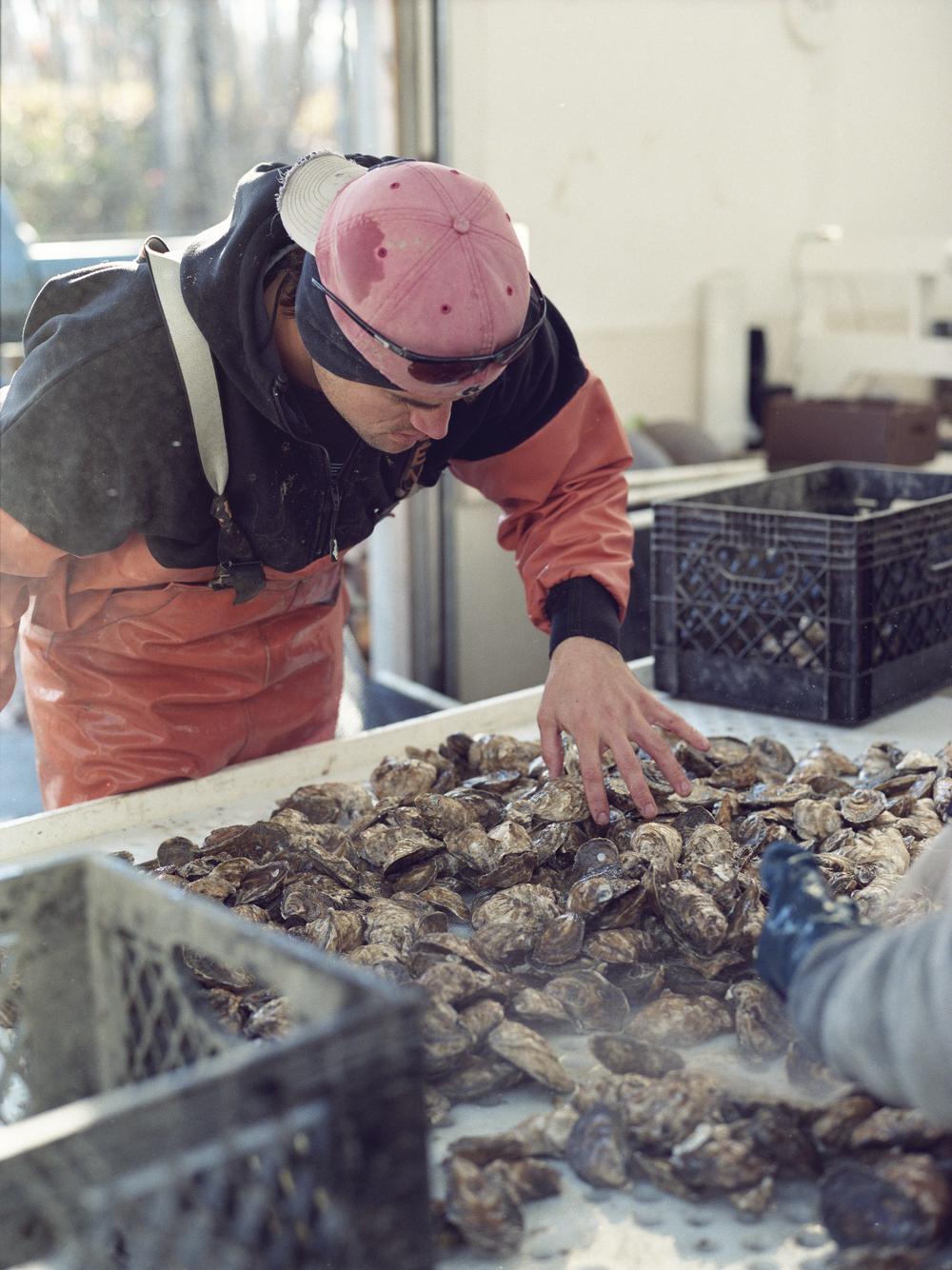 Oysters_Roll2-4.jpg