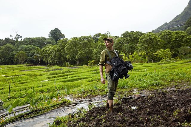 Taro farm in Oahu! 🦶🎥☔ | 📷:@jasonfrankrothenberg #barefootdp #portabrace #olivedrab