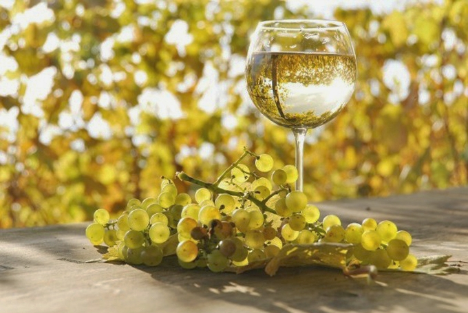 Sauvignon Blanc and the collaboration of the New Zealand wine industry is another incredible success in positioning a plant varietal grape as a world leader.
