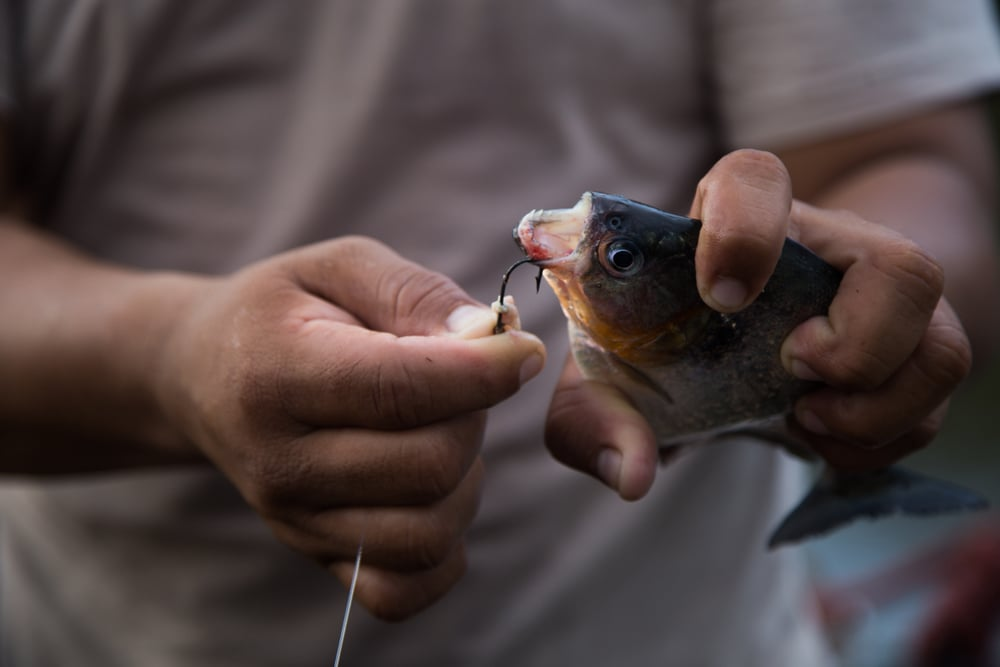 Stoll_Shira_2015_PiranhaFishing_2.jpg