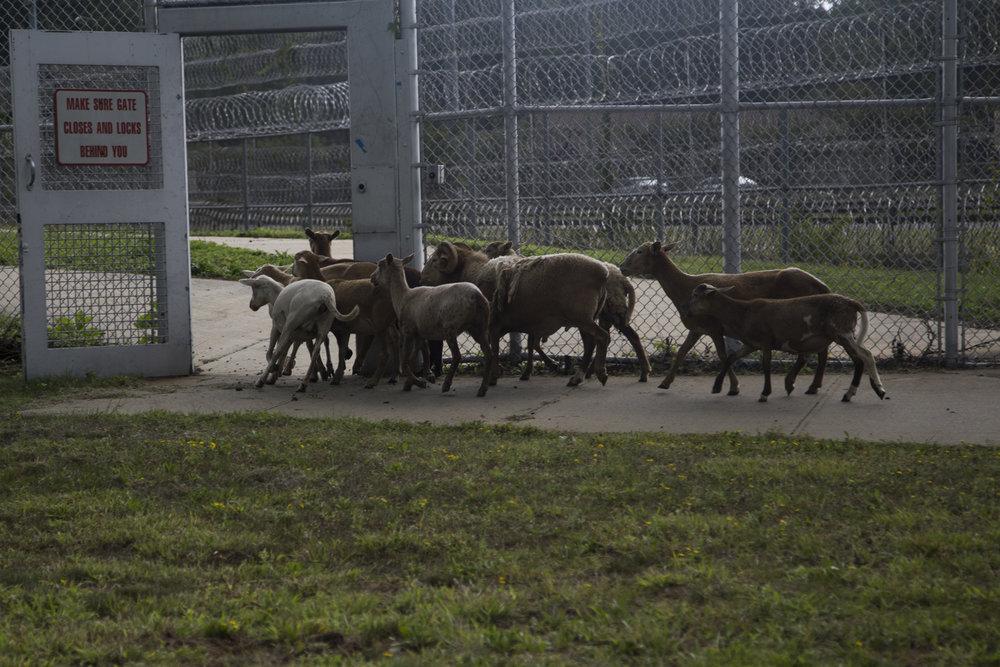 cty arthur kills prison-38.jpg