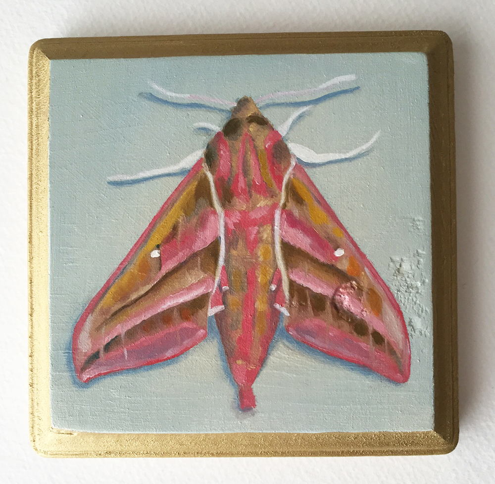 elephant hawk moth   oil on wood 5""