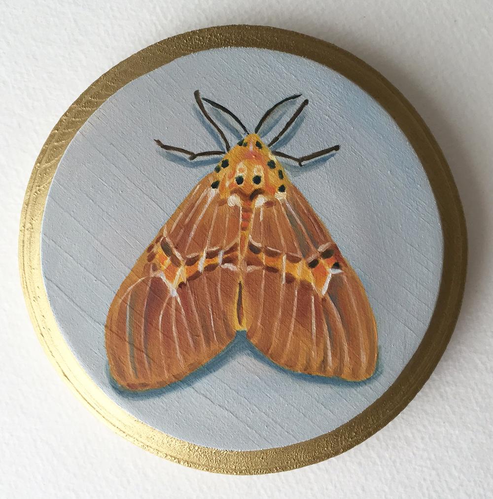"garden tiger moth   oil on wood 5"""
