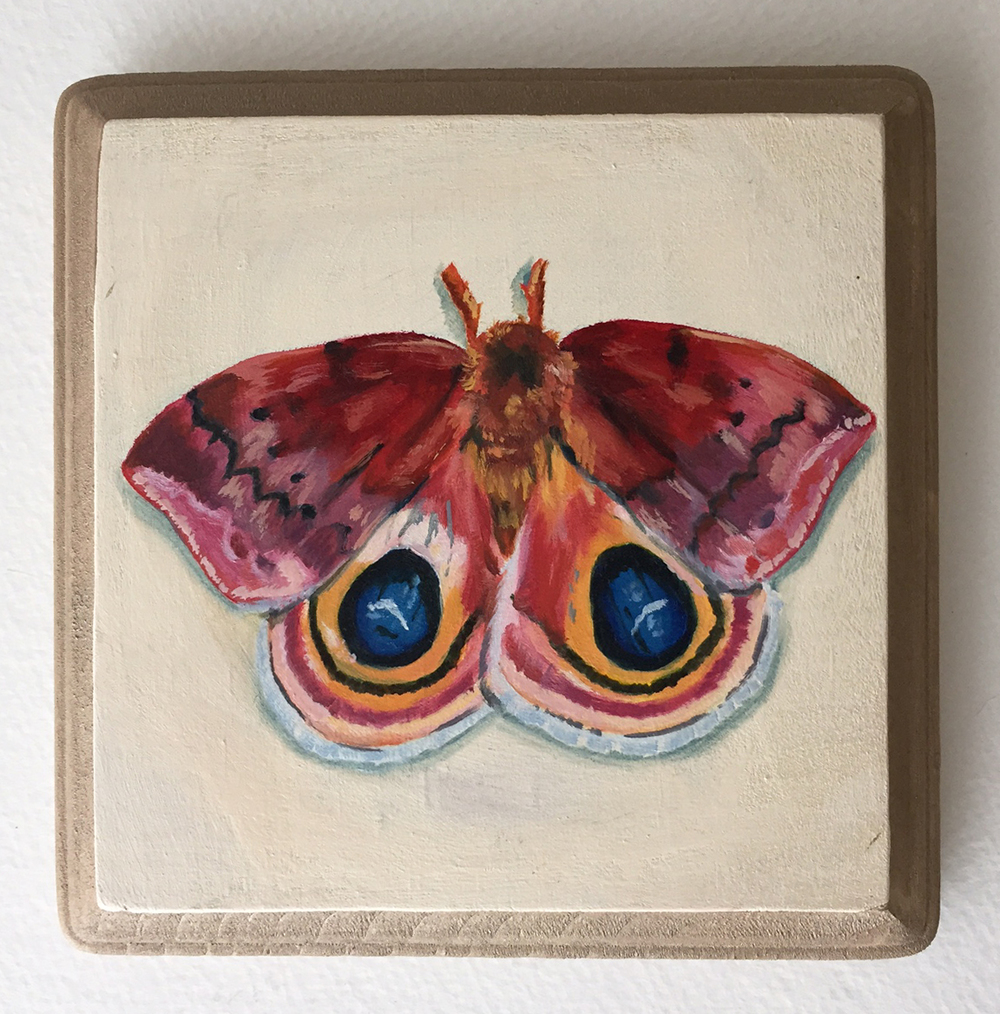 io moth   oil on wood 5""