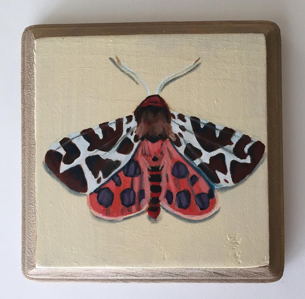 "tiger moth   oil on wood 5"""