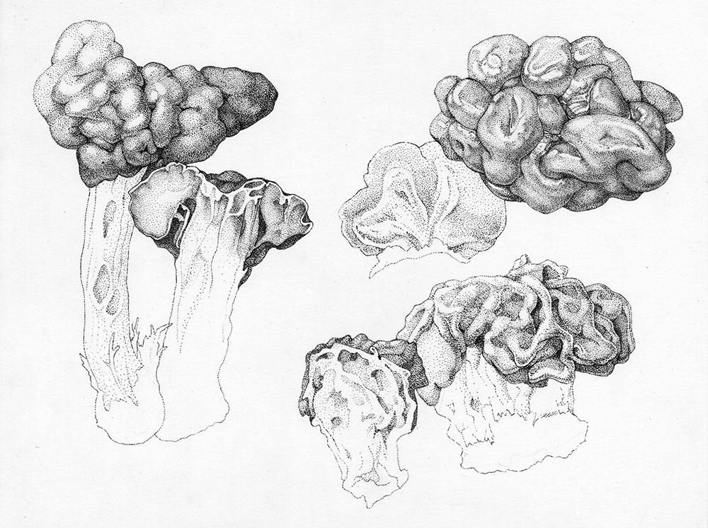 Convoluted Cap Mushrooms