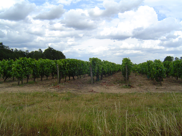 Un des vignobles d'Anjou que nous avons visité  (  http://www.parc-loire-anjou-touraine.fr/fr  ) Photo: Louise Beaupré