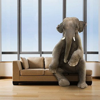 The Elephant in the Room \