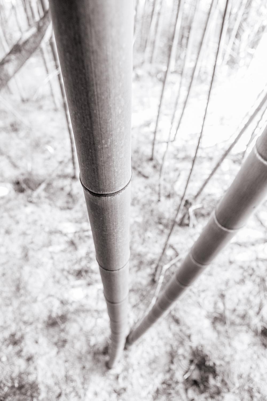 _MG_0921-Edit-2-26.jpg