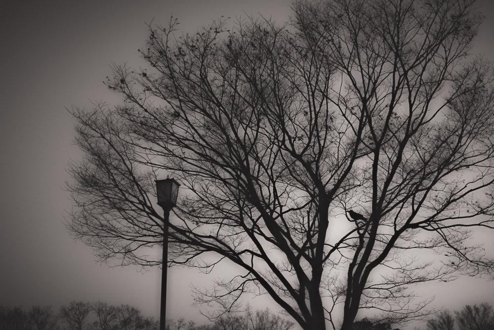 _MG_7554-Edit.jpg