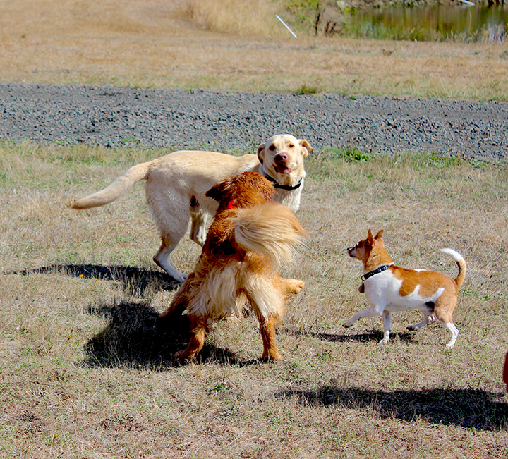 dogs_small.jpg