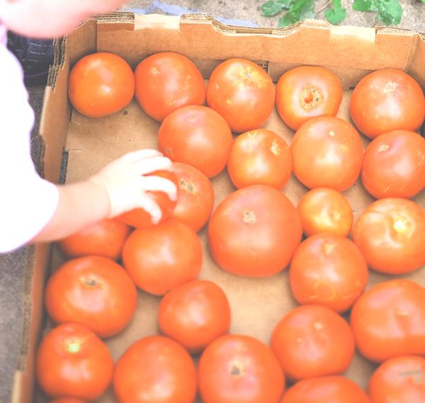 Tomatoesfromthefarm