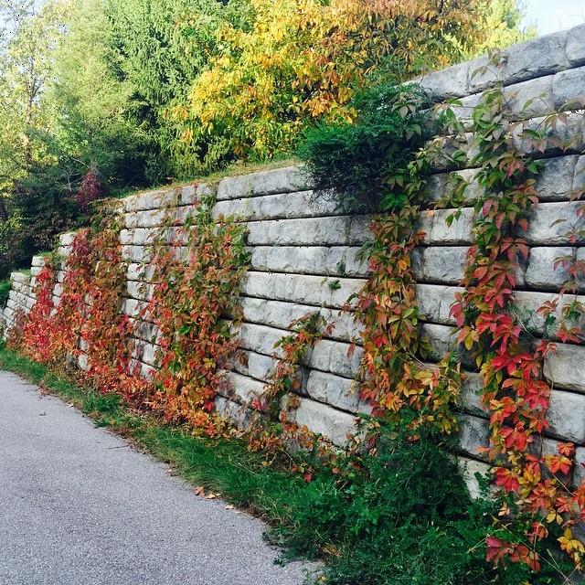 #autumninada #colorfulvines #everydayismajestic #goldengoodness #believechangeisgoodforoursoul #walkthisway #octoberrocksinmichigan