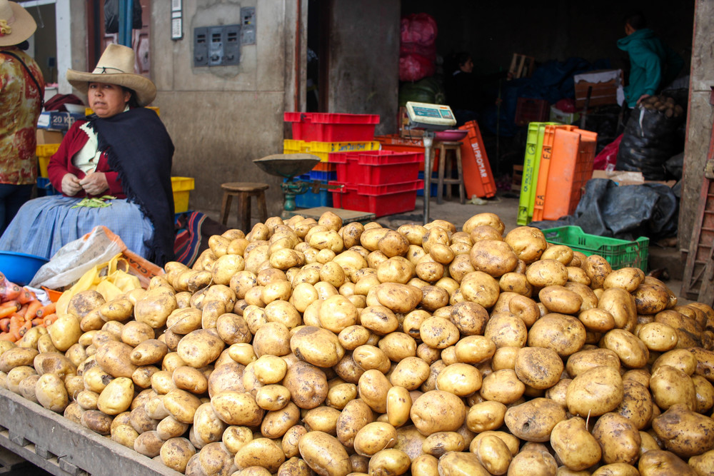 Papa amarilla in Cajamarca. This is the most popular and pervasive potato in Peru. It is also the starchiest.