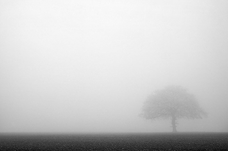 fog with tree