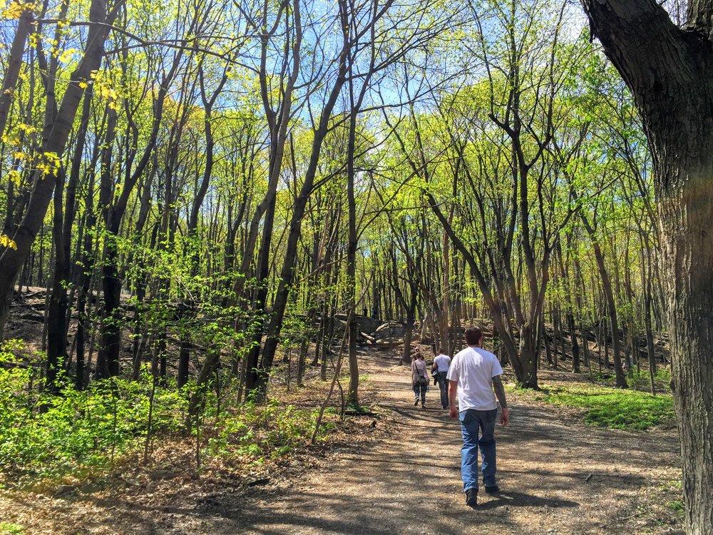 A stroll up Mount Royal park
