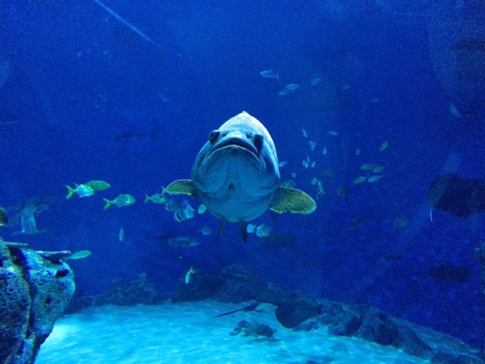 Killer fish at the Den Blå Planet aquarium // Copenhagen, Denmark