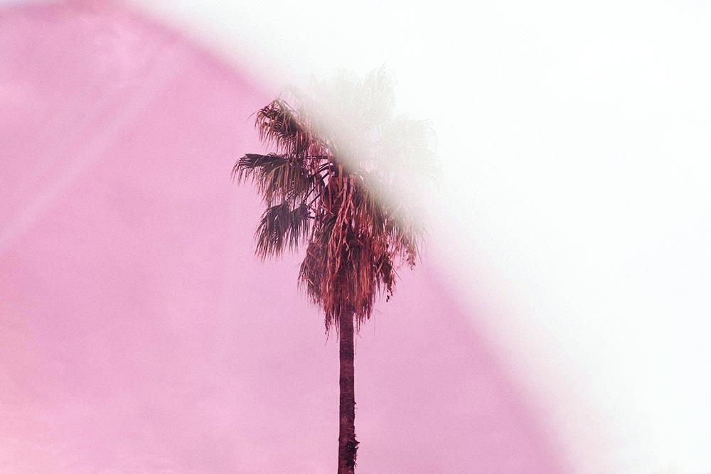 peachy palm print