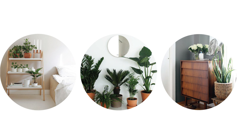 From left to right | Potted plants on shelves image from  bloglovin  | Potted plant garden image from  french fancy  | Snake plant image from  apartment therapy  |