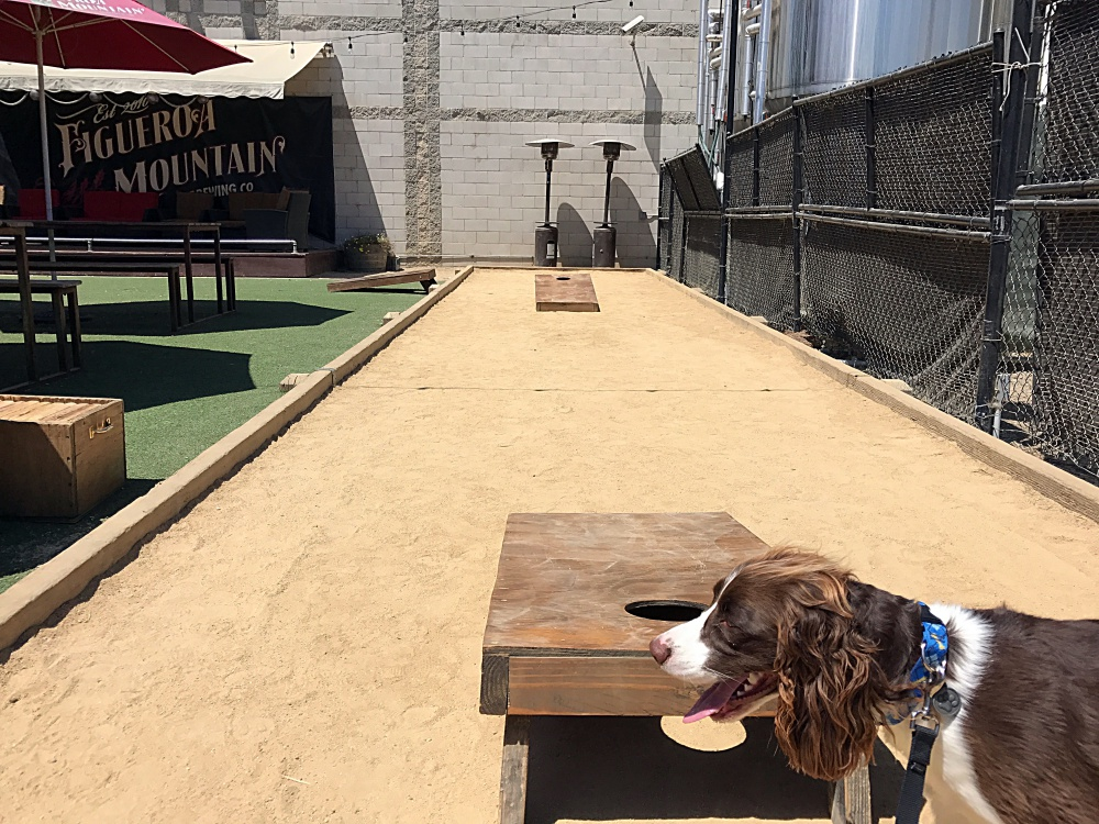 One of two corn hole sets, and half a pooch