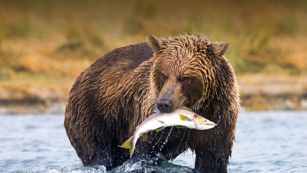 A Bear. - A fish.