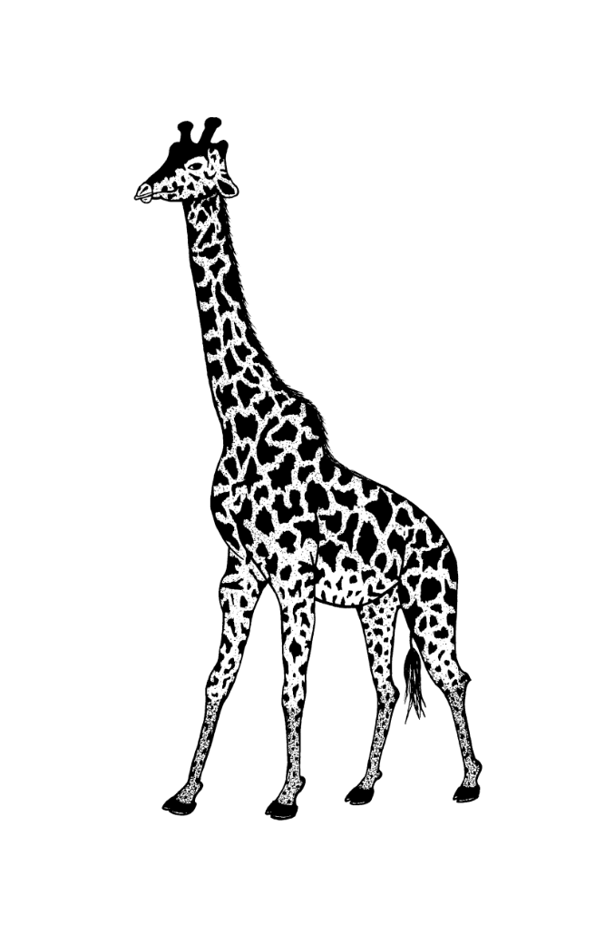 Giraffe   Illustration  Prints available