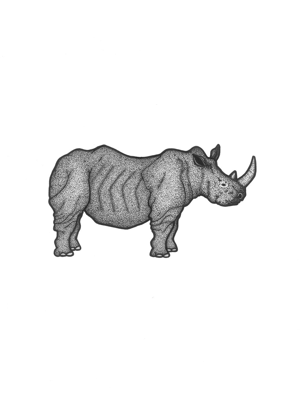 Rhino   Illustration  Prints available