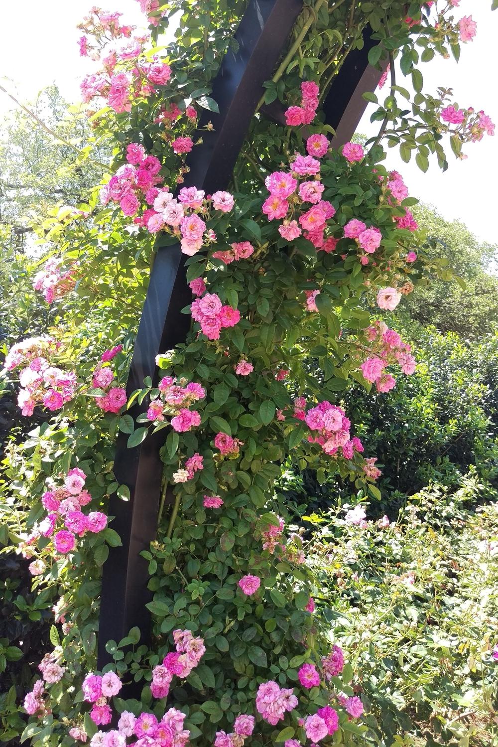 Rose Garden - Three Heel Clicks 6.jpg