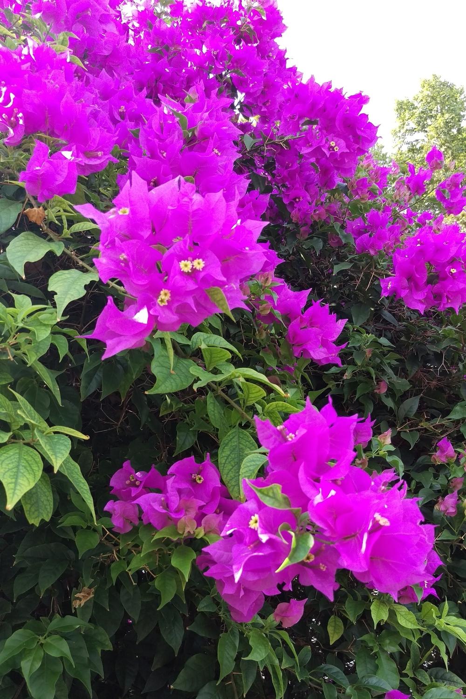 Summer Flowers - Three Heel Clicks 3.jpg