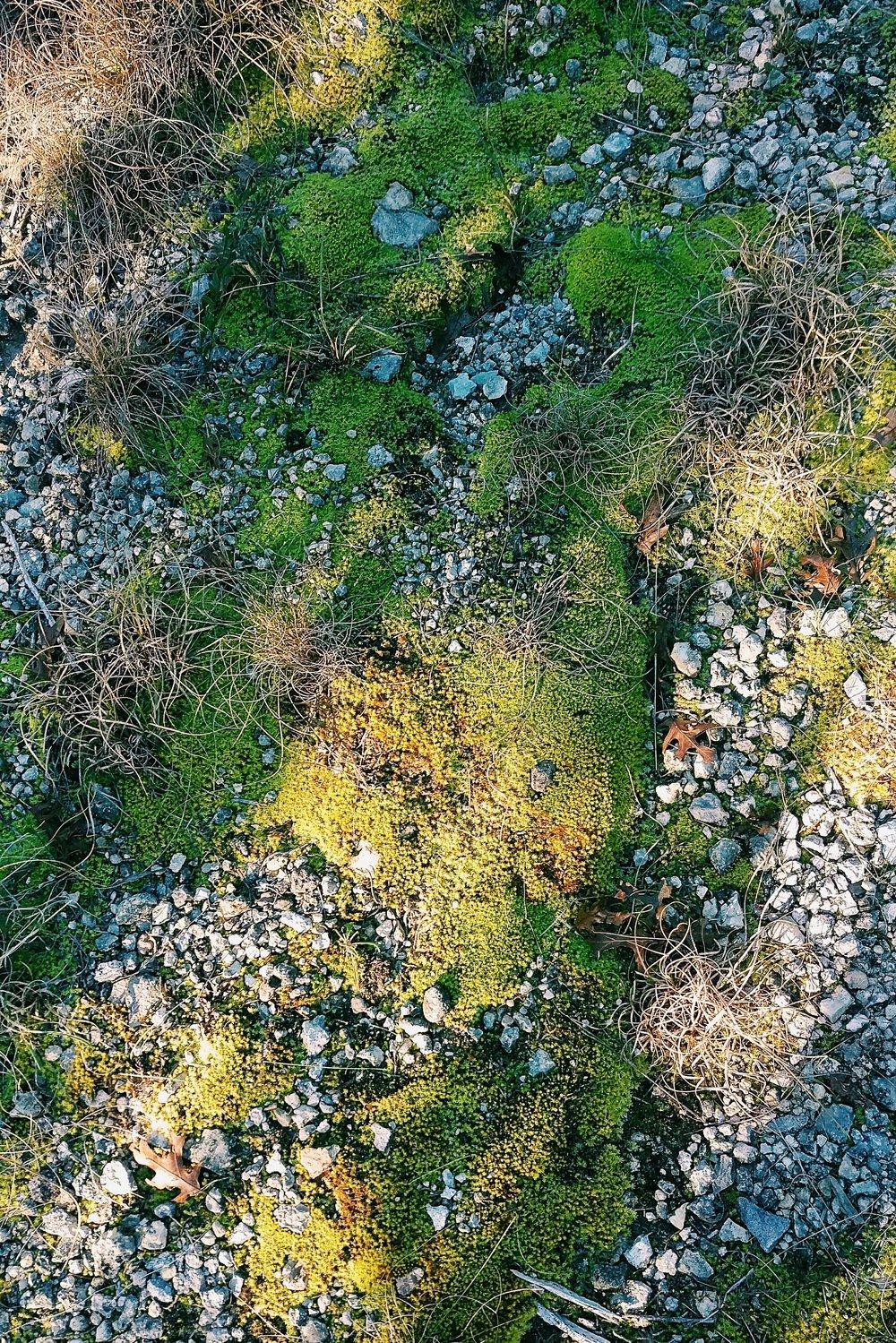 Wild Basin - Austin - Three Heel Clicks 6.jpg