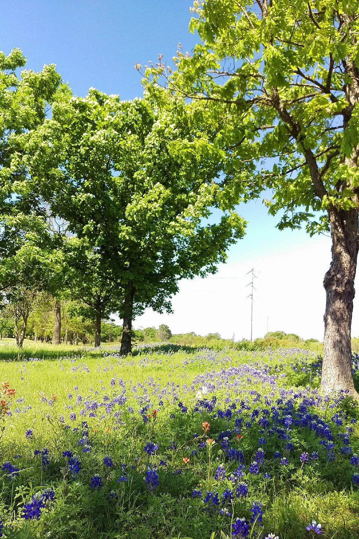 Spring Green & Bluebonnets - Three Heel Clicks 6.jpg