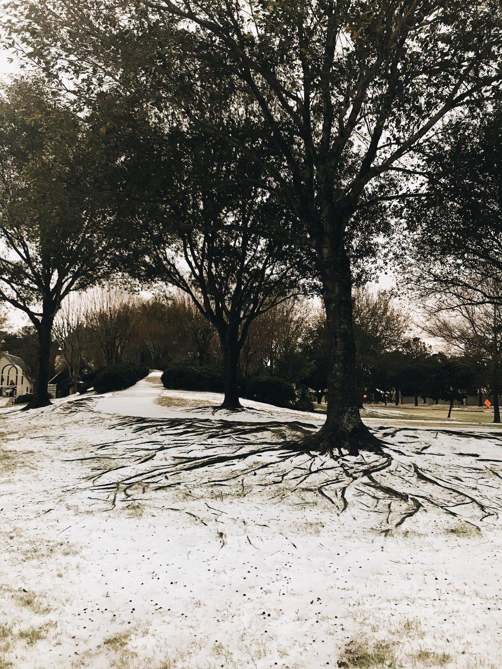 Three Heel Clicks - Snow Day (9).jpg