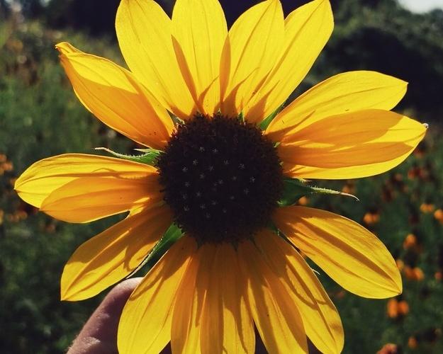 Texas Flower Season