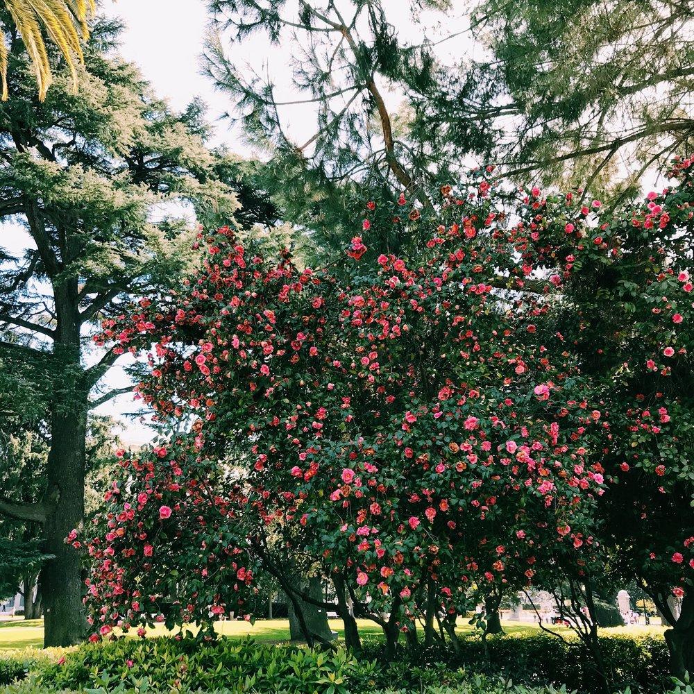 Three Heel Clicks - Spring Blooms in Sacramento's State Capitol Park (23).jpg