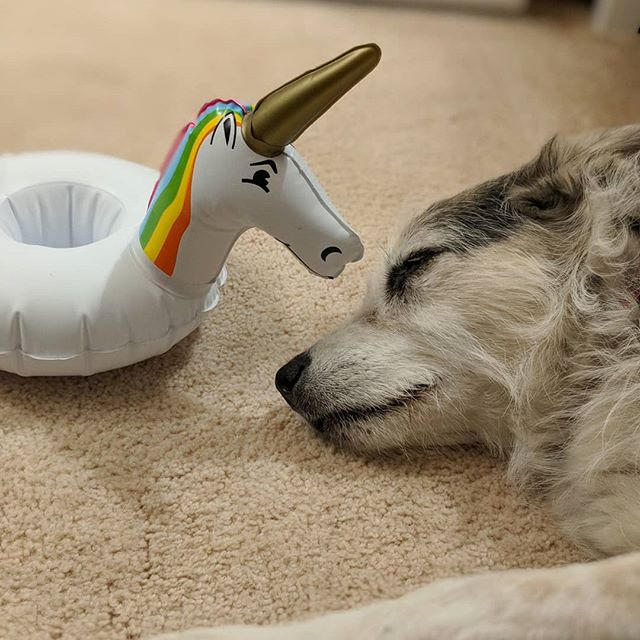 Psst.  #areyouawake #unicorns #dreaming #shewenttosleeplikethis #psst #excuseme #dogs #dots